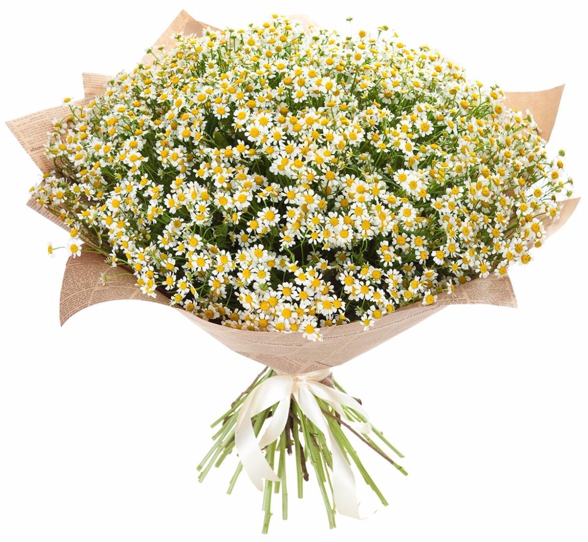 Букет ромашек на заказ в москва, база цветов глория